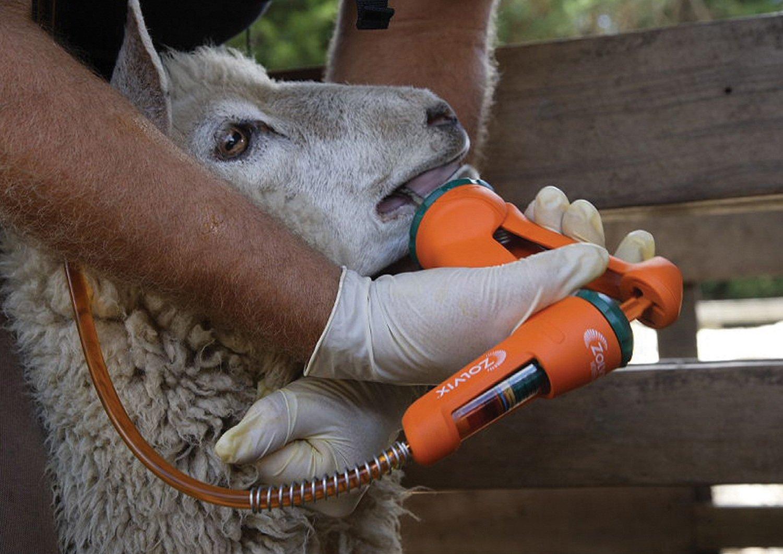 vermifugo oral em ovelhas